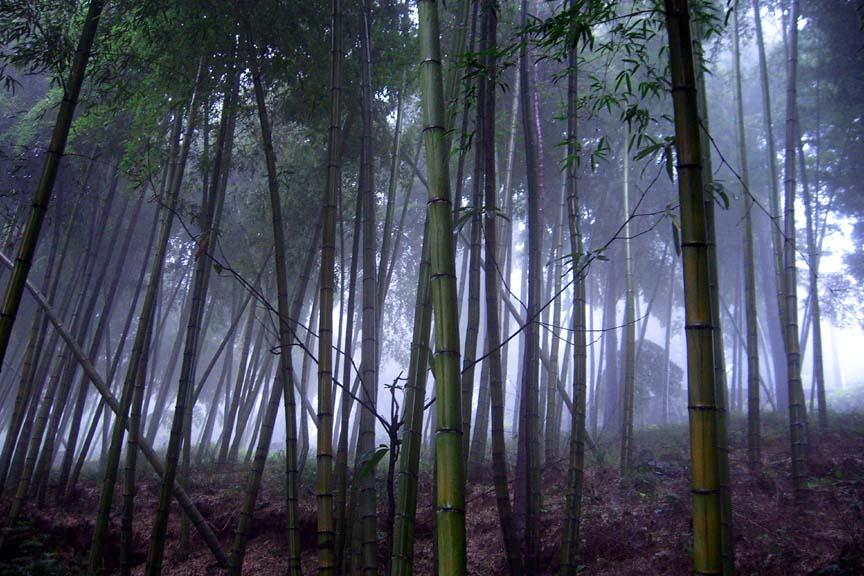 Moganshan 2008